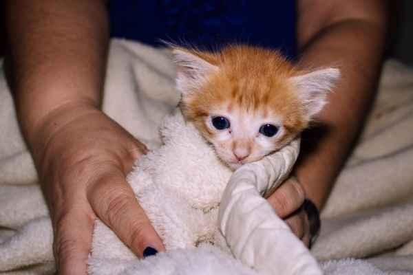 Sonhar com gato filhote machucado