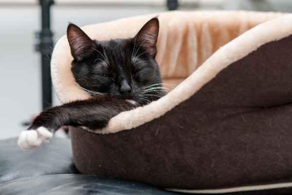 Sonhar com gato dormindo