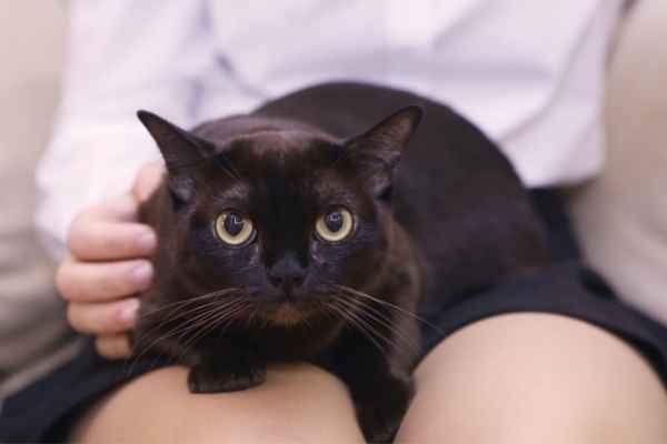 Sonhar com gato preto no colo