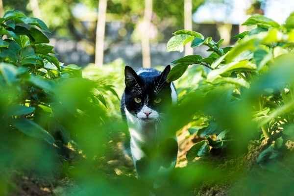 Sonhar com gato sendo caçado