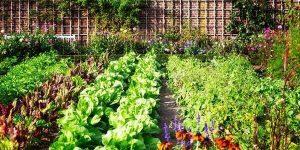 Sonhar com horta
