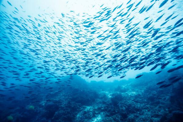 Sonhar com muitos peixes