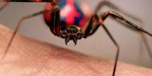 Sonhar com aranha picando