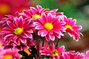 Sonhar com flor