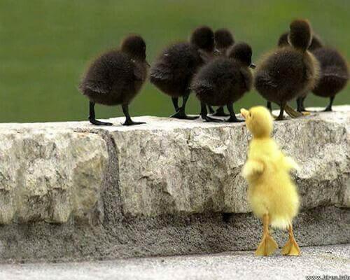 Sonhar com galinha preta