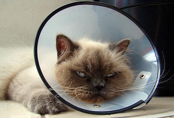 Sonhar com gato machucado
