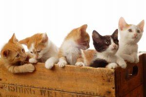 Sonhar com muitos gatos