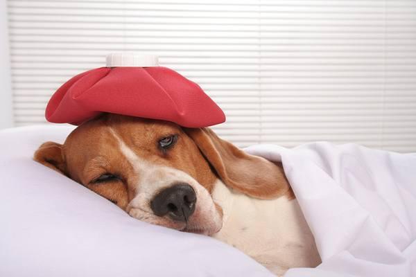 Sonhar com cachorro doente