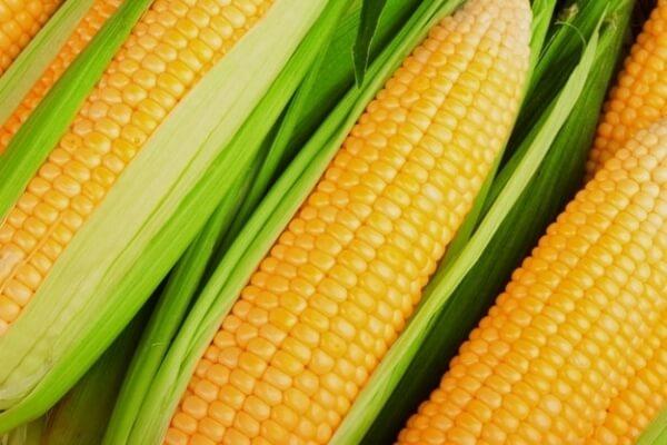 Sonhar com milho verde