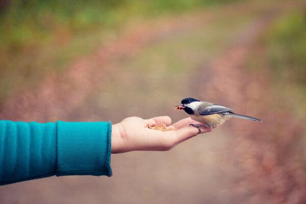 Sonhar com pássaro na mão