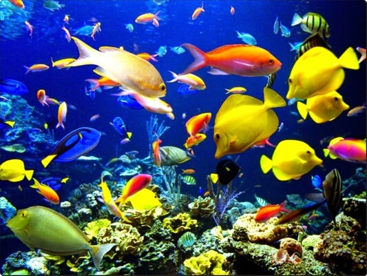 Sonhar com peixe colorido