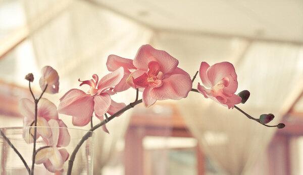 Sonhar com orquídeas