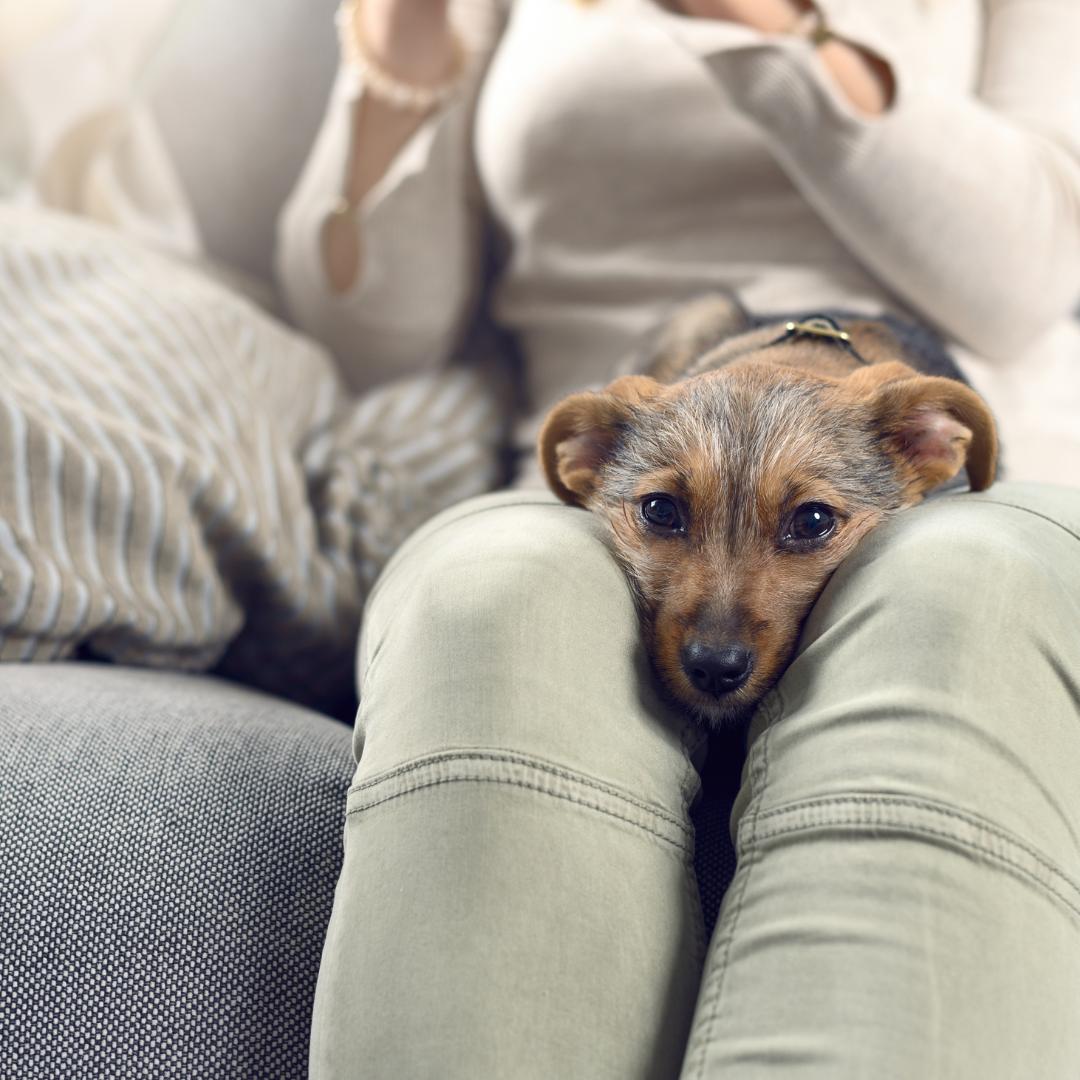 Sinais de que o seu cachorro te ama