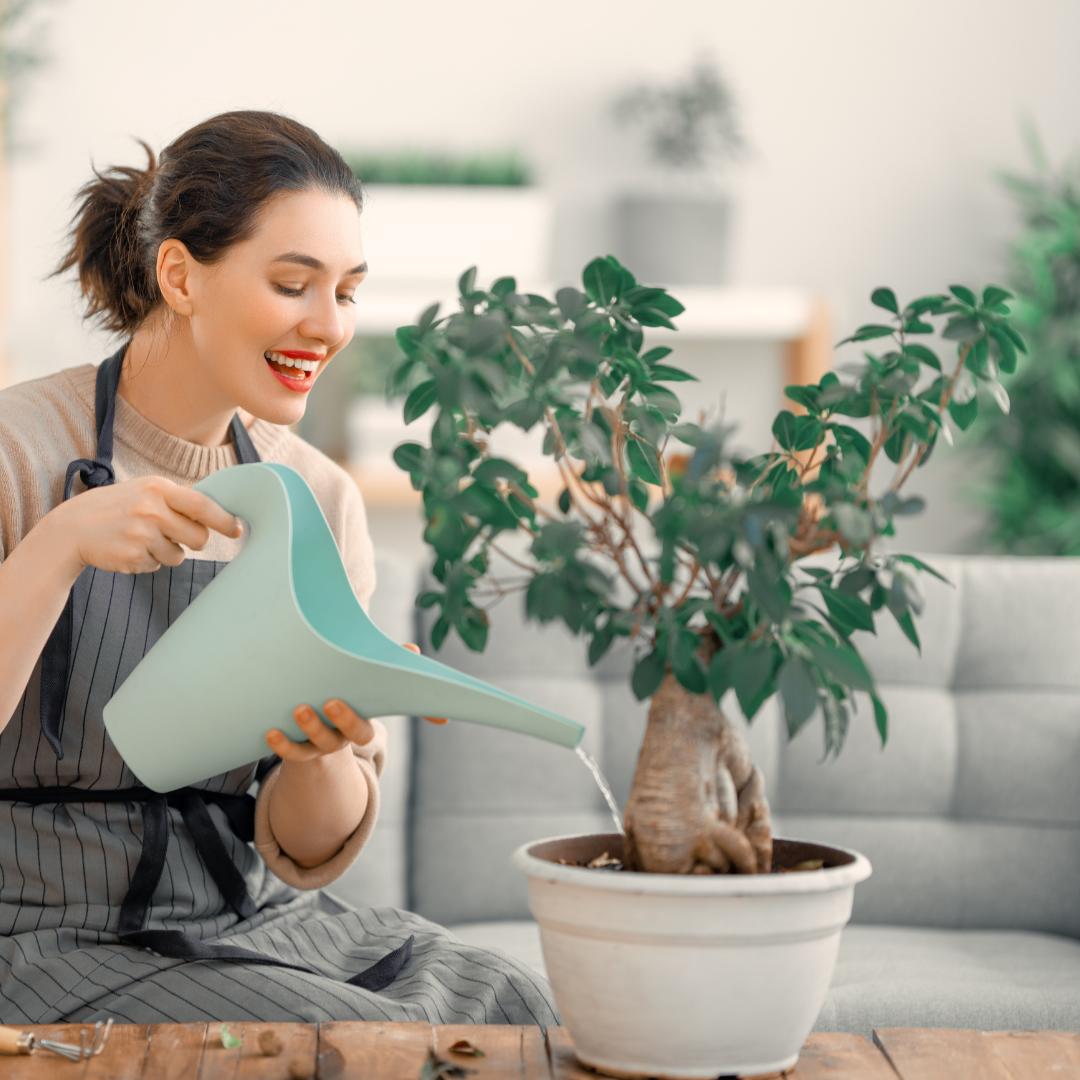 como cuidar das plantas
