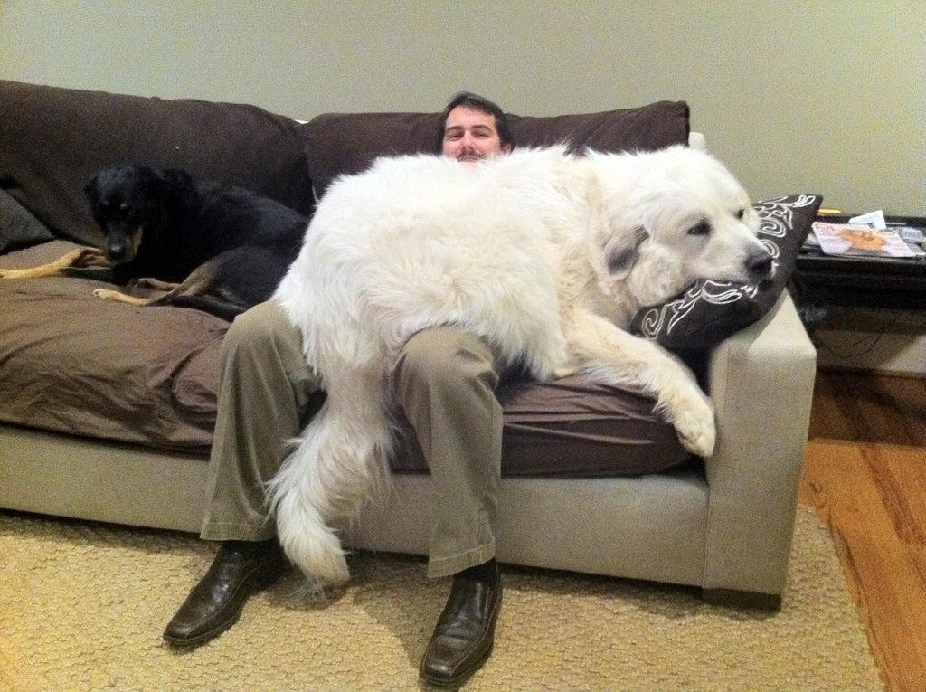 Cachorros sem noção de seu tamanho