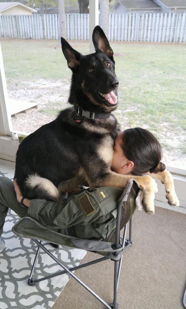 Esses 10 cachorros não têm noção do tamanho deles