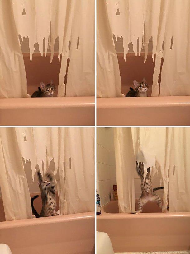 Bagunças feitas por gatos