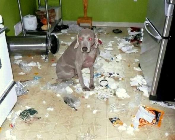Ataquei a cozinha sem querer querendo