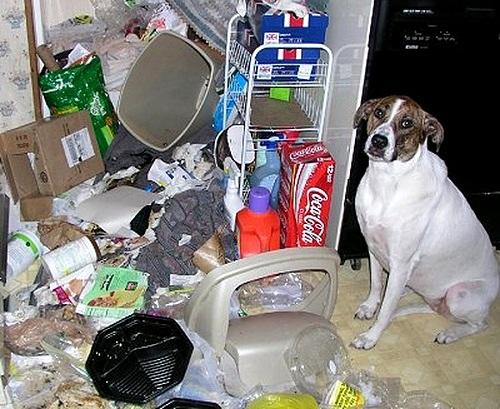 Quem bagunçou a despensa, mamãe?