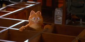 Maiores bagunças de gatos