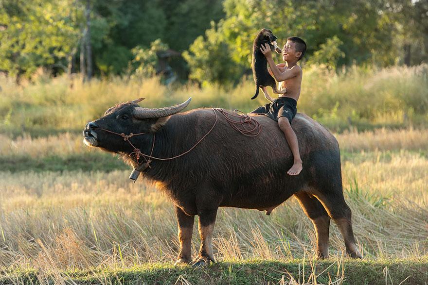 O búfalo e o cachorro