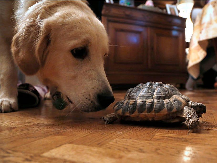 cachorro e tartaruga