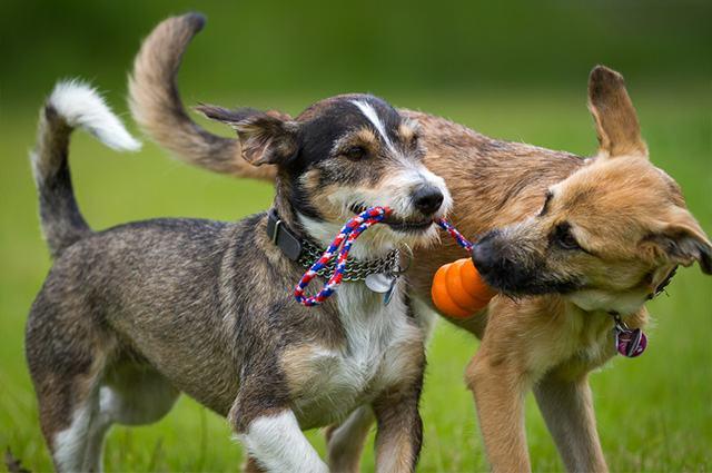 cachorro e cachorro