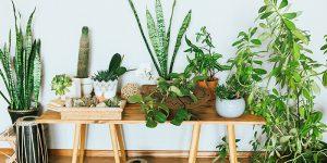 pedras e plantas para energizar ambientes