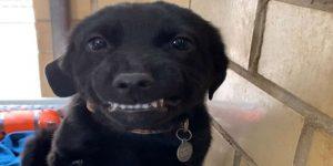 As mais terríveis bagunças feitas por cães