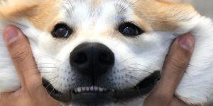 Raças de cães para cada signo