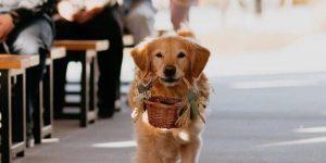 cachorro leva alianças