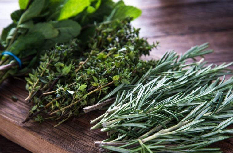 plantas para aromaterapia