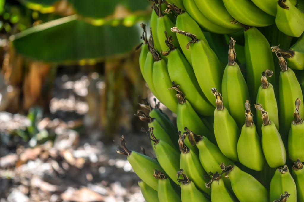 Sonhar com banana verde significa inveja