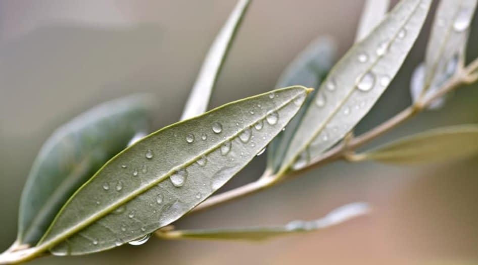 Plantas que curam para ter em casa