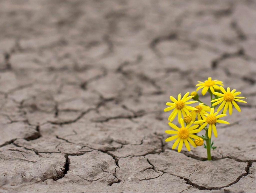 Passagens bíblicas sobre esperança: as melhores!