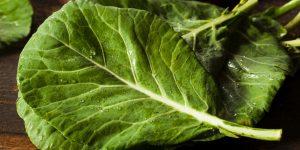 folhas de couve