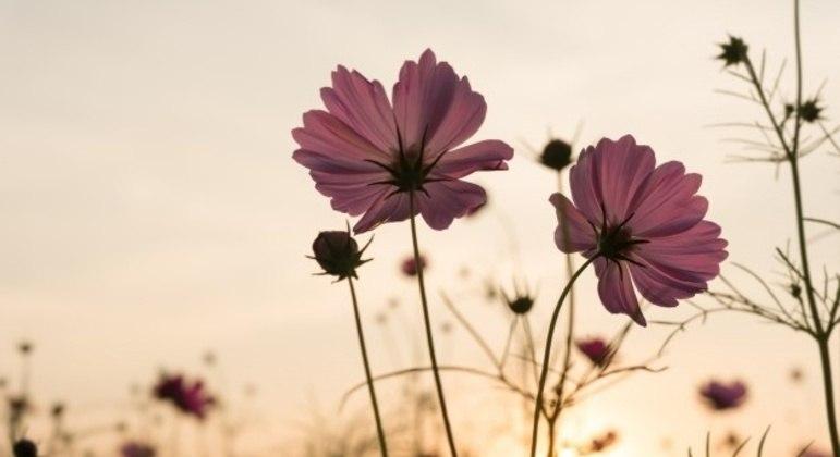 Influencia da primavera na vida dos seres humanos